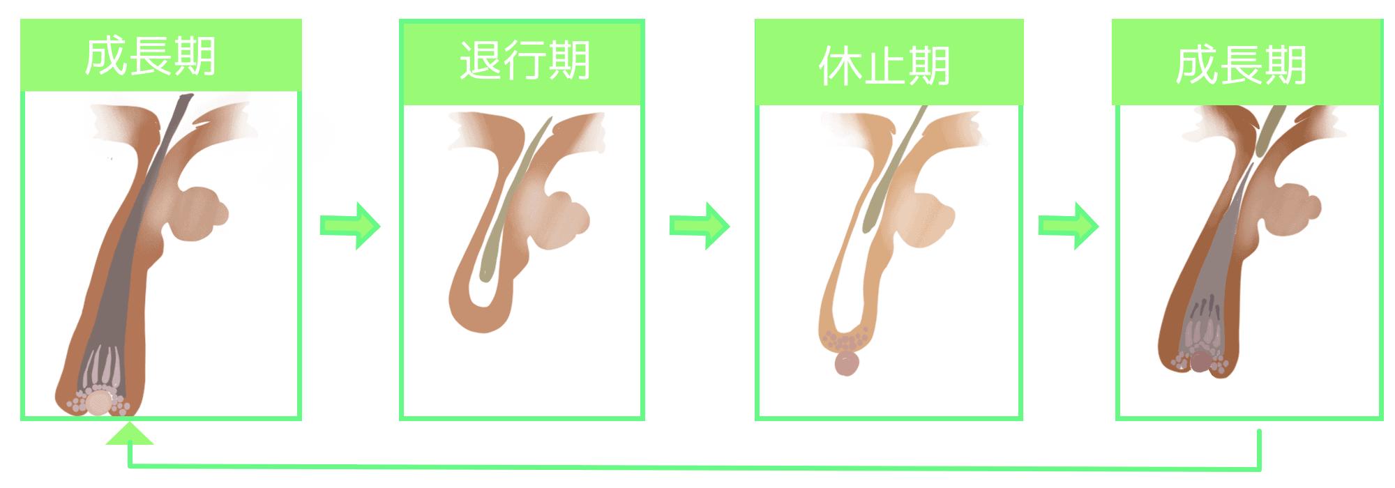 【湯シャンの正しい方法】美容師が教える効果的な洗い方(デトックス)